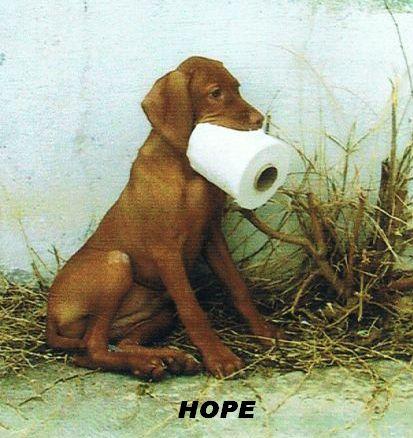 hopetoiletpaper_b